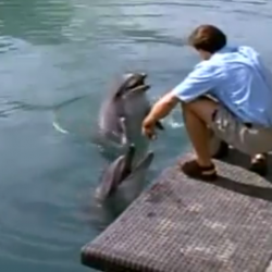 Flippers Dolphin Training